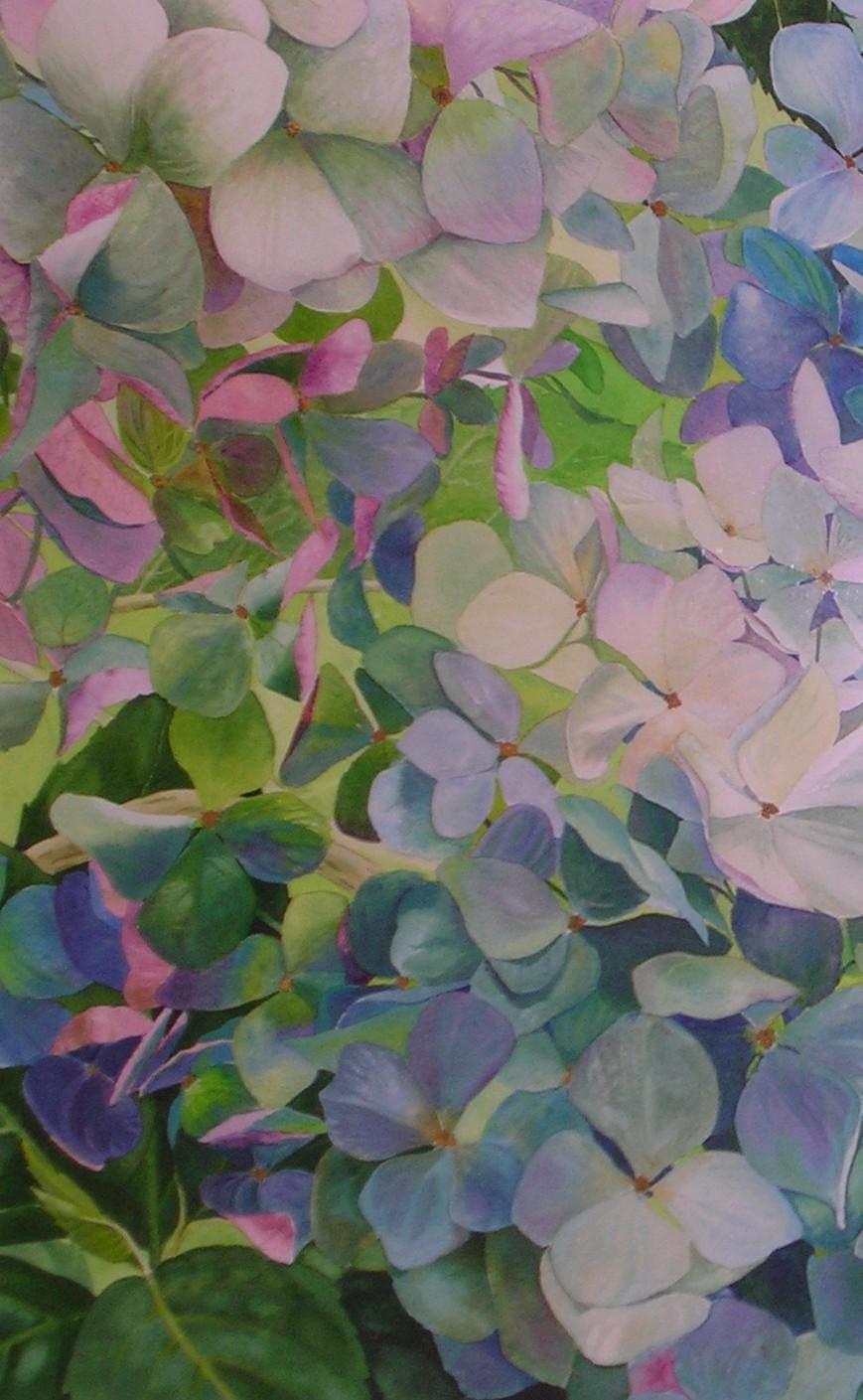 hydrangea, watercolor, 24x30