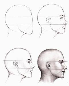 anatomy-drawing-class-essex-ct